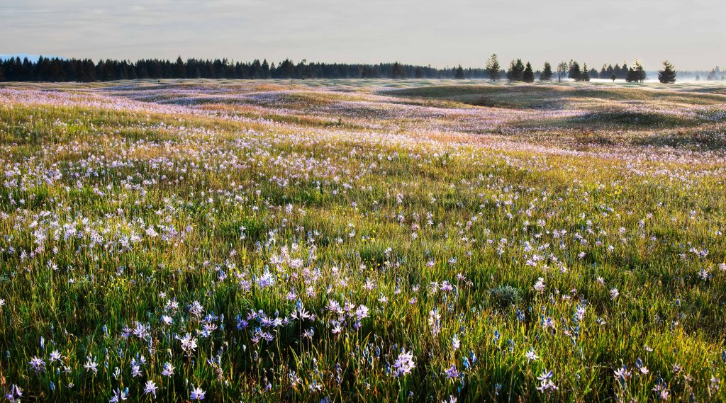 Spring on Glacial Heritage, Photo by Dennis Plank