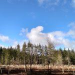 Oak Planting at Colvin Ranch (S. Hain)