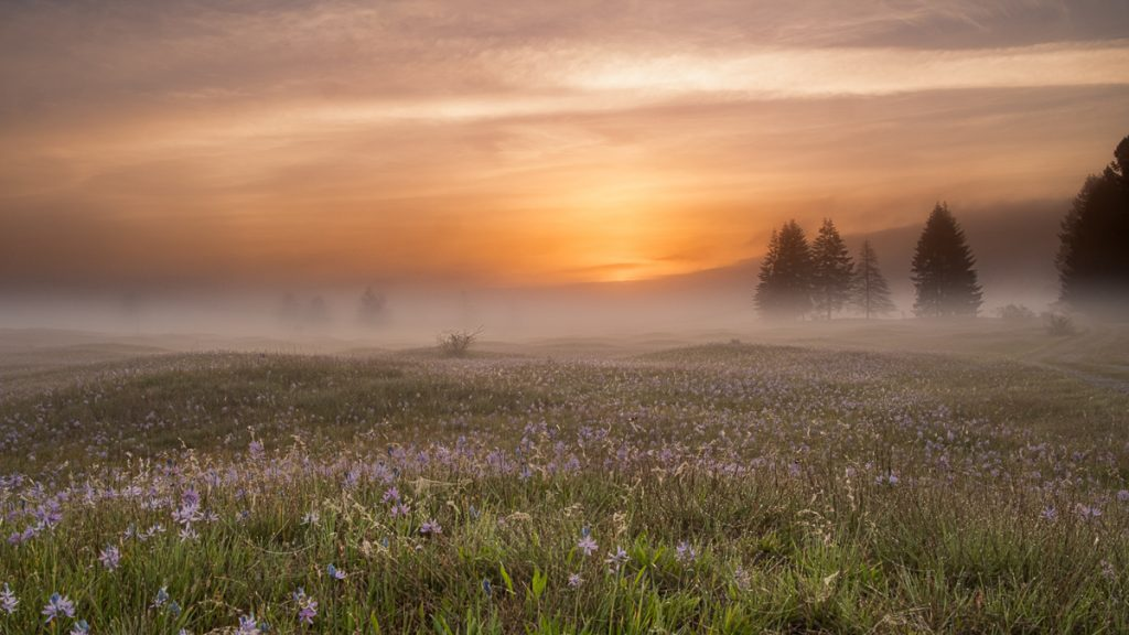 Prairie_Morning_MRafferty_9x16-2