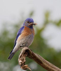 20180529-_7D22525yardbirds-Editdesktop