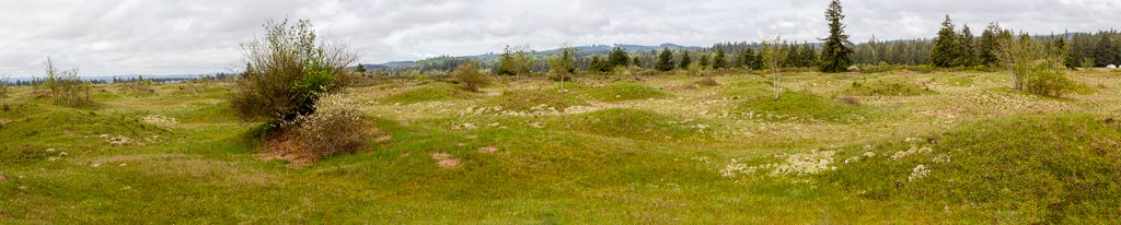 Mima Mounds, Panorama 1, photo by Dennis  Plank