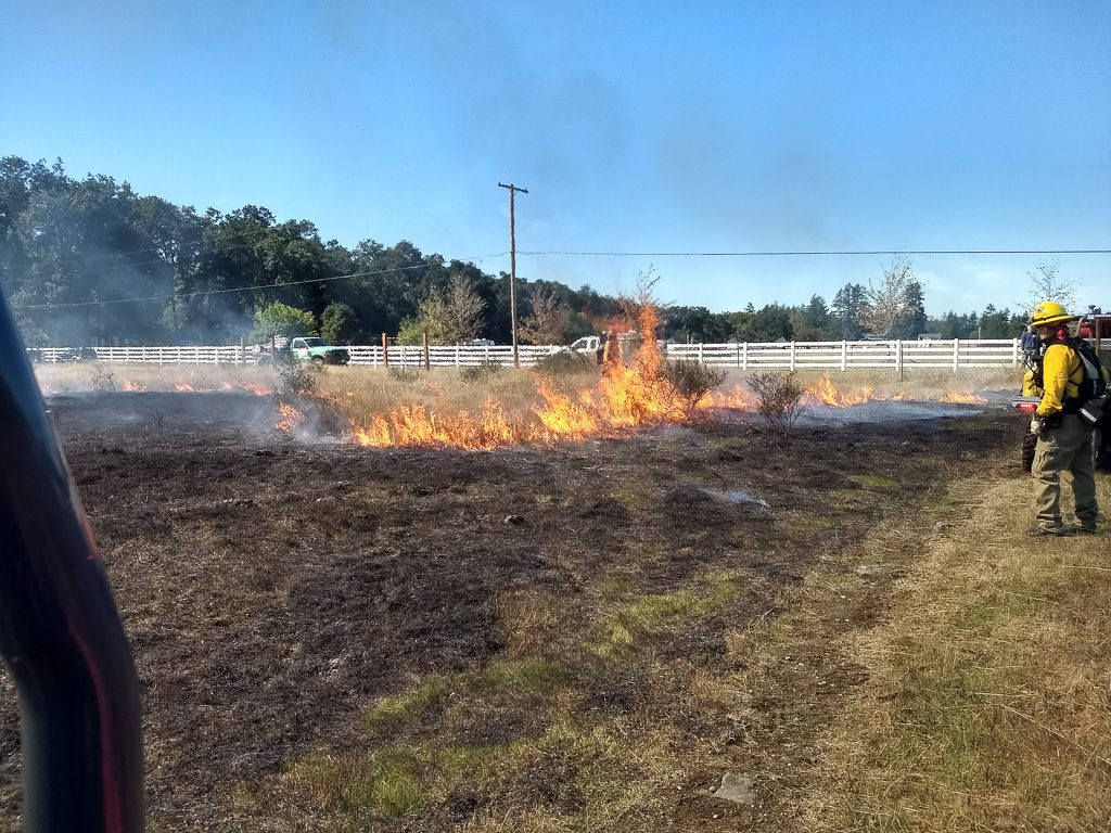 Fisher Prairie, 1st prescribed burn for this unit. Photo by Ivy Clark