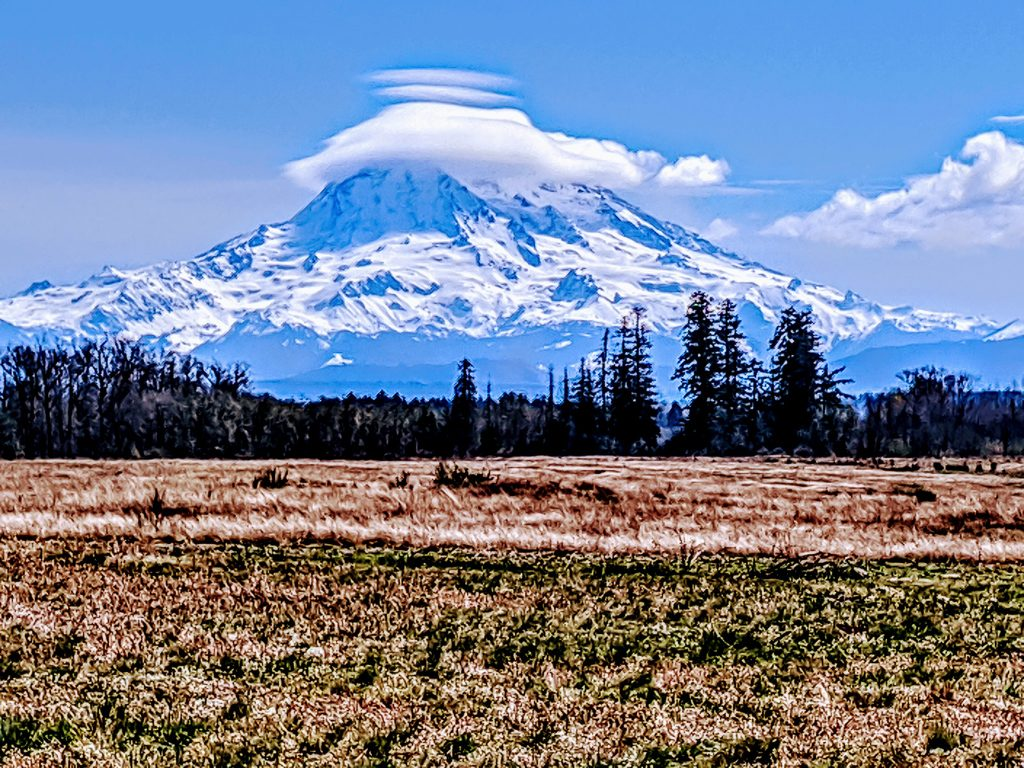 Mount Rainier (Tahoma) from the Streaked-Horned Lark restoration area.  Photo by Adrian Wolf