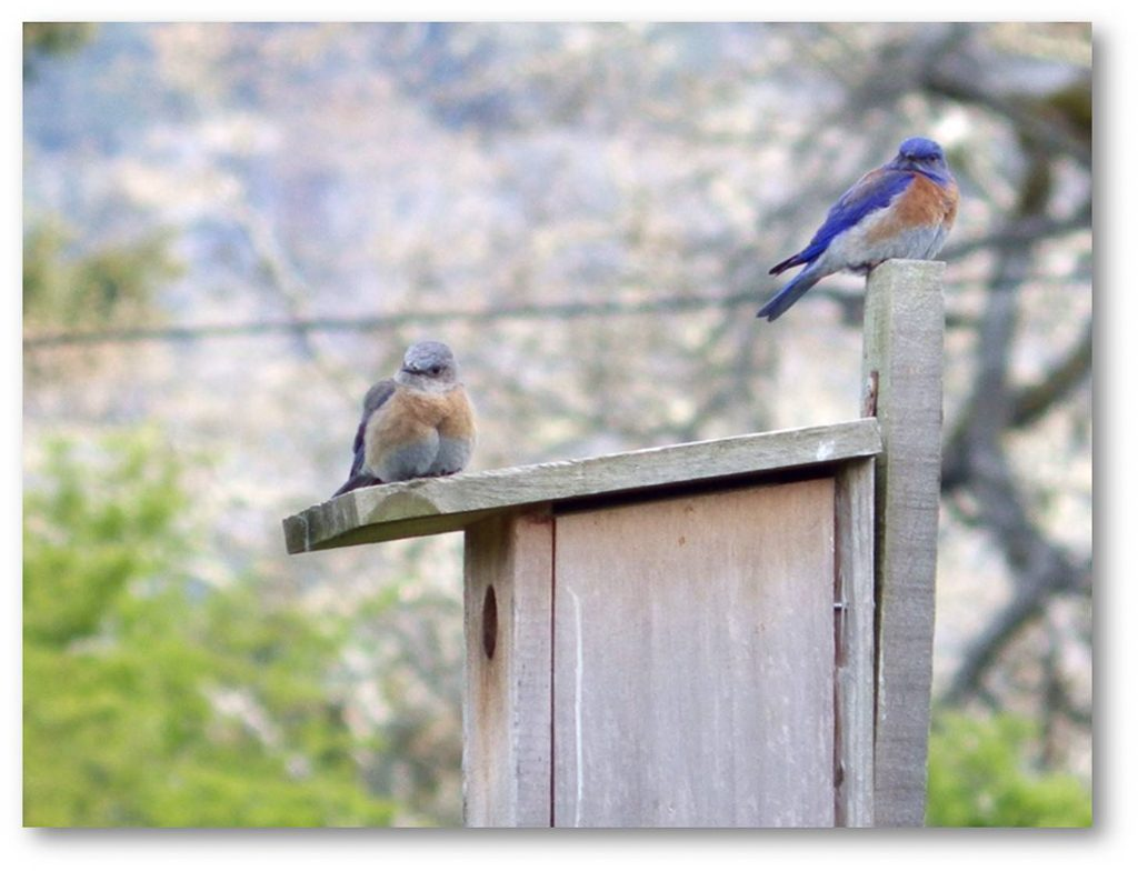 A Common Design for Bluebird Nest Boxes, unknown photographer