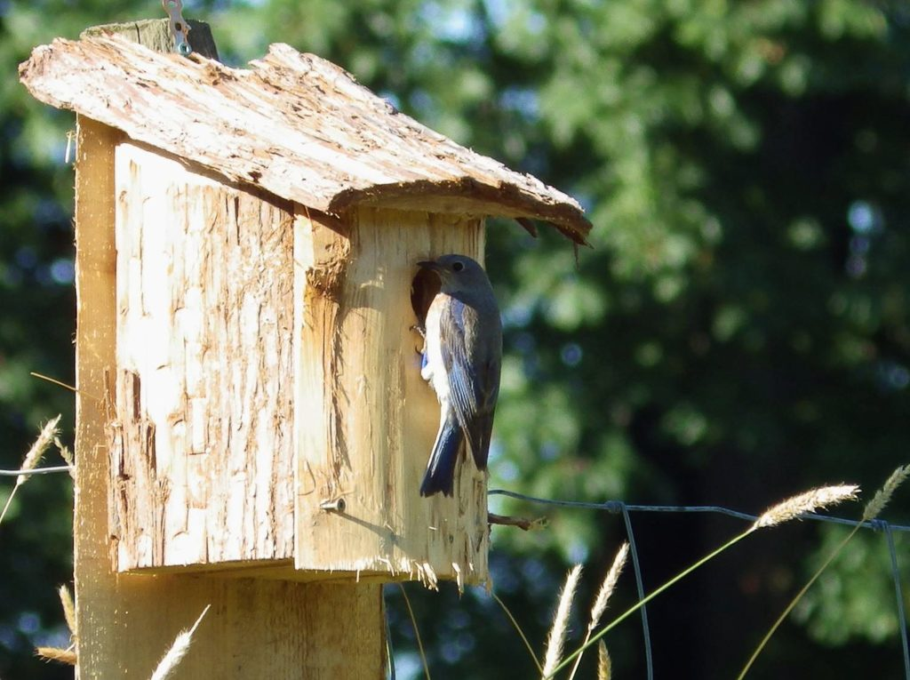 A More Rustic Take on Bluebird Box Design, unknown photographer