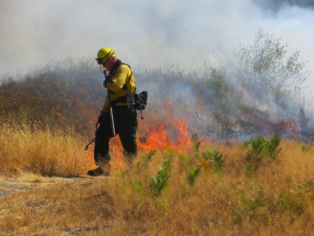 Prescribed Burn, Sanders Freed, Center for Natural Lands Management