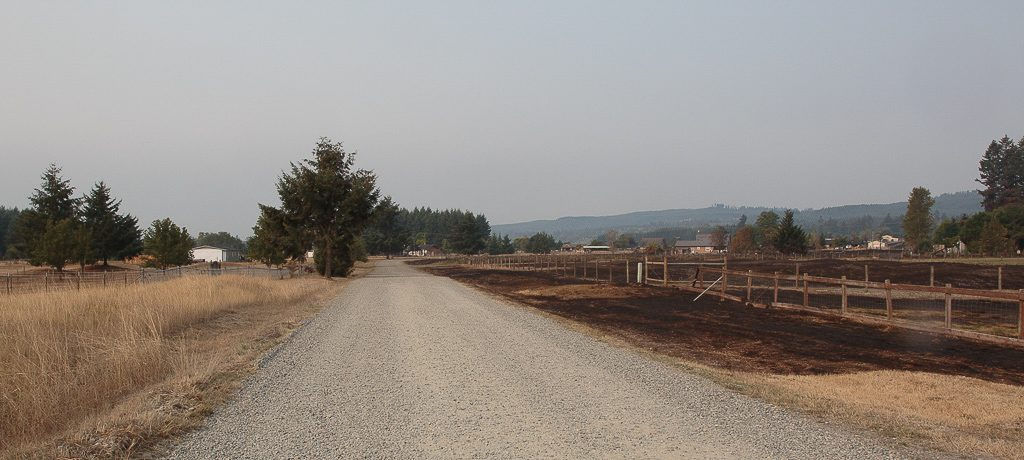 View Looking toward Mima Road from our driveway after the burn.   We're on the unburned side.  Photo by Dennis Plank