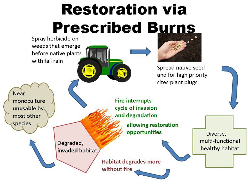 Restoration with Burns.  Graphics by Ivy Clark