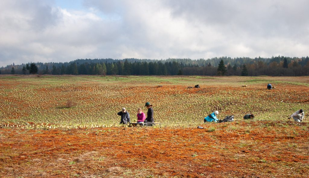 Planting Forbs for Butterflies