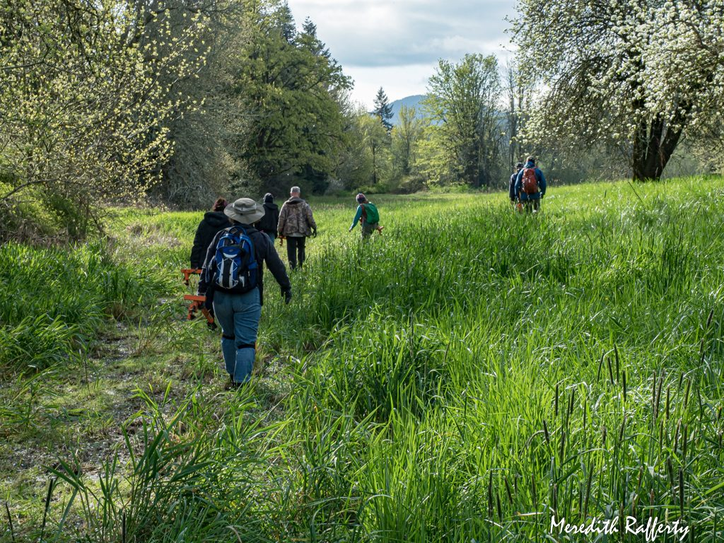"Volunteers set off for a day's work, ""weed wrenches"" in hand. This is Deschutes River Preserve, a protected property of CNLM under restoration near Tenino. It is part of a network of preserved prairie lands that includes the familiar Glacial Heritage. A perk of volunteering is to be able to visit many of these scenic sites. Photo by Meredith Rafferty"