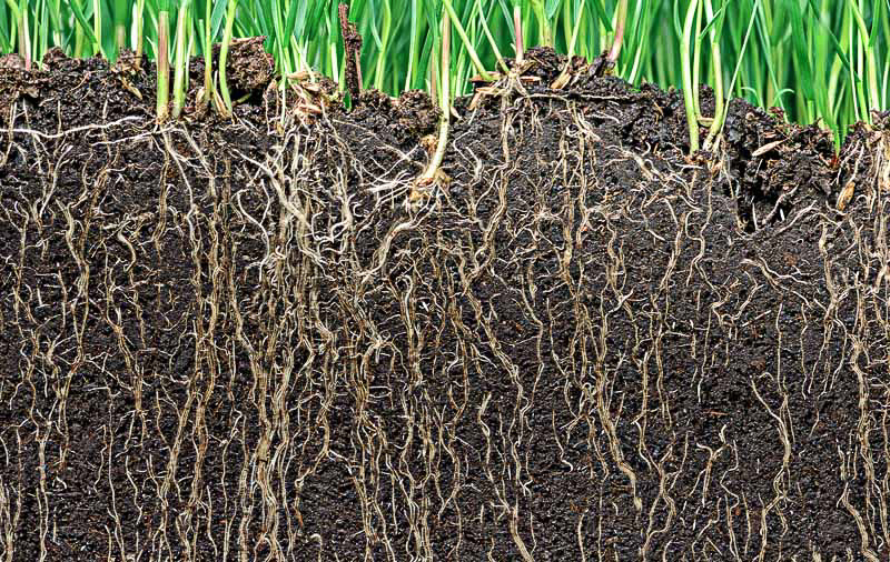 Roots add organic matter and improve soil structure. (https://gardenerspath.com/how-to/composting/benefits-soil-inoculants/)