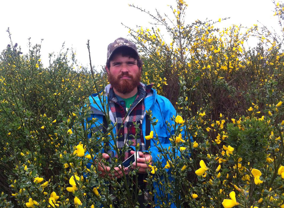 Me standing in a dense thicket of Scot's broom at Mazama Meadows while doing one of the first botanical surveys of the site.