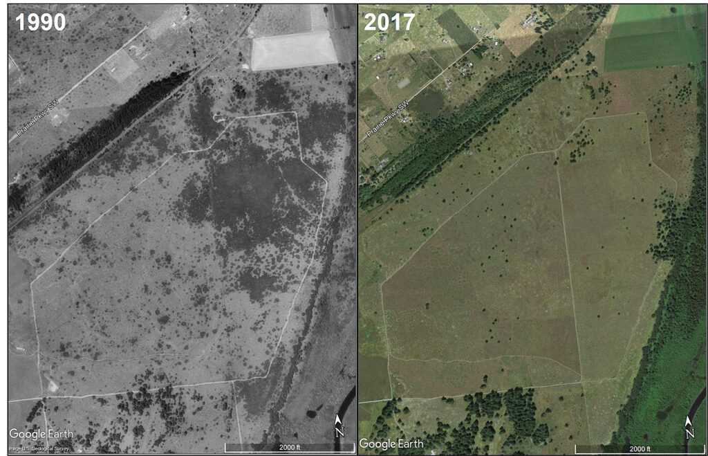 The dramatic change of the prairie habitat at Glacial Heritage Preserve between 1990 and 2017. The dark gray splotches in the 1990 photo are Scot's broom patches, which are completely absent by 2018.