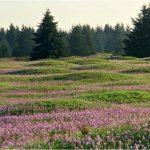 Signature Mima Mounds (WA DNR)