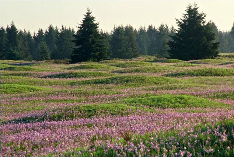 Signature Mima Mounds (WA DNR)