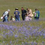 Visitors admiring the prairie bloom